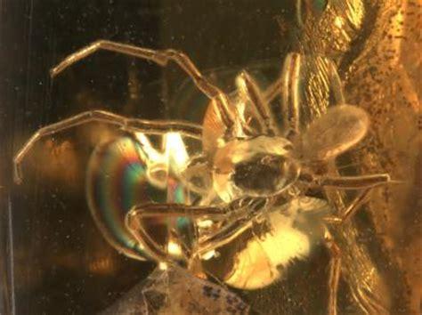 Cd Ride Tarantula hi tech scans catch prehistoric mite hitching ride on spider w