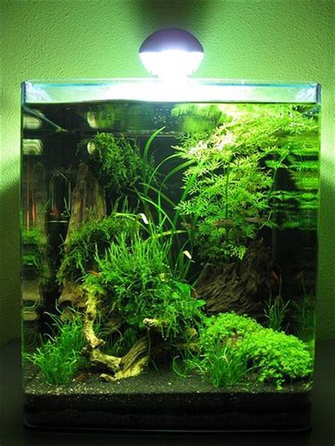 How To Set Up An Aquascape by 25 Best Ideas About Nano Aquarium On Betta Tank Betta Aquarium And Aquarium Set