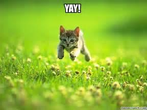 Yay Meme - yay kitten