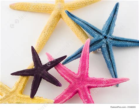starfish colors image of starfish in different colors