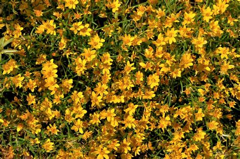 wildflowers that bloom in the fall what s happening september 30 2008 tucson real estate news