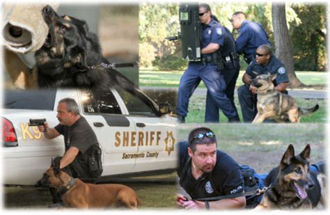 how are k9 dogs trained celtic highlands and k 9 convention headed for lincoln