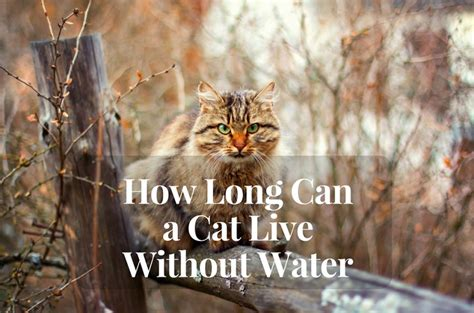 how can a go without water how can cats go without water cats