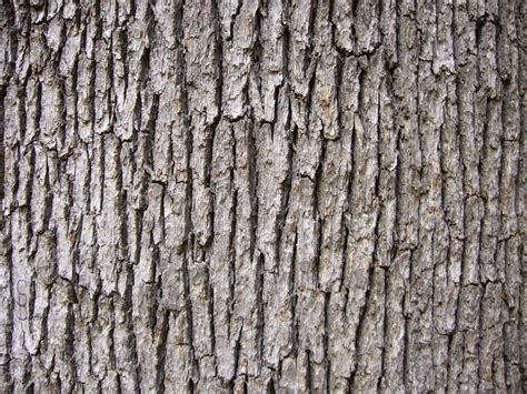 free wood texture oak tree bark