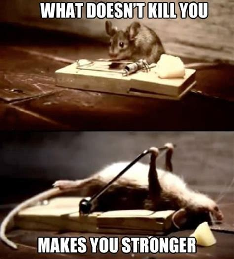 Stupid Animal Memes - 30 funny animal captions part 11 30 pics amazing