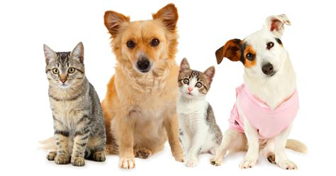 dogs and cats top 10 most popular and cat names of 2014 dogtime