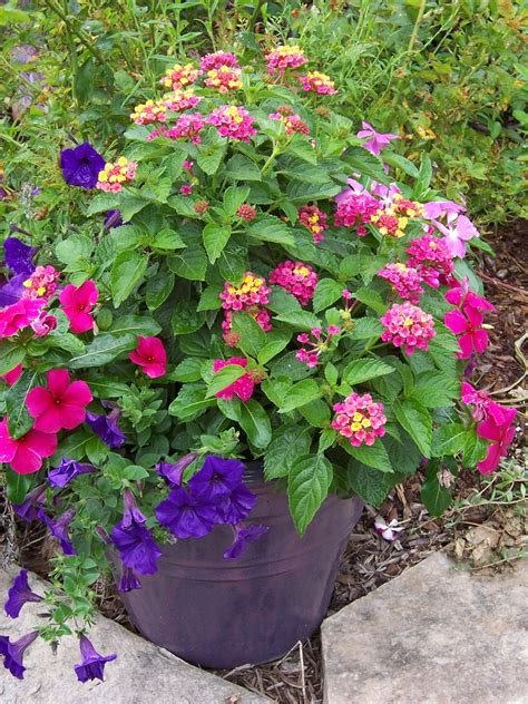 Container Flower Gardens This Garden Cooks Back To Basics Design A Great Container