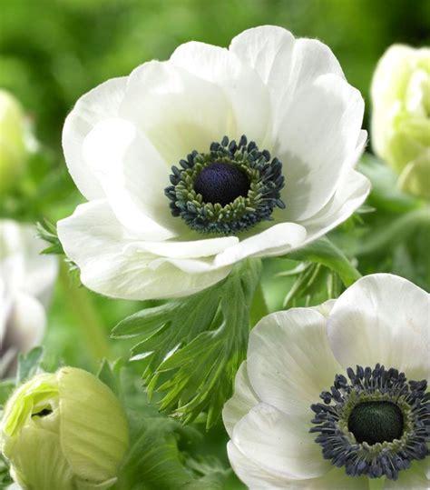 Gartenideen Pflanzen