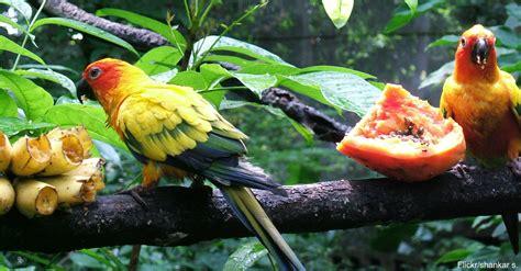 extinction of larger fruit eating animals may hasten