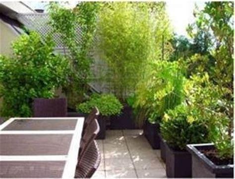 piante alte da terrazzo piante in terrazzo piante da terrazzo