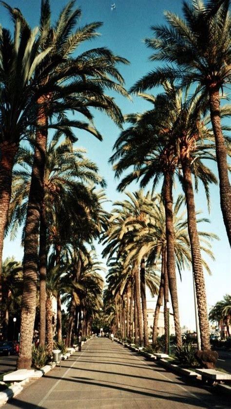 palm tree wallpaper palm tree iphone wallpaper wallpapersafari