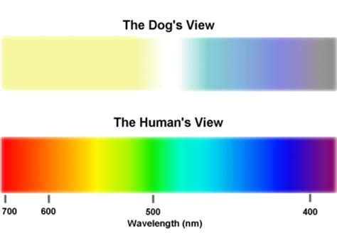 are dogs color blind color blindness in
