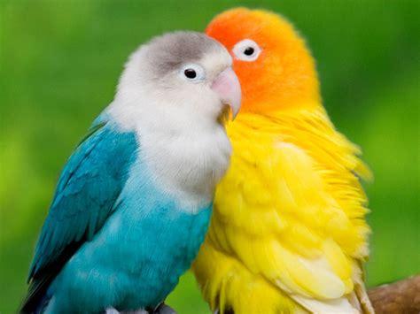 wallpaper birds desktop wallpapers colourful parrots desktop wallpapers