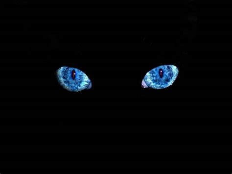 wallpaper of blue eyes wallpapers black cat blue eyes