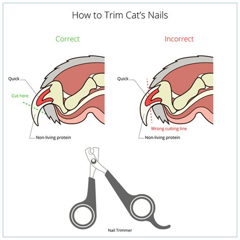 how to cut nails that are how to trim cat s nails bengal cats