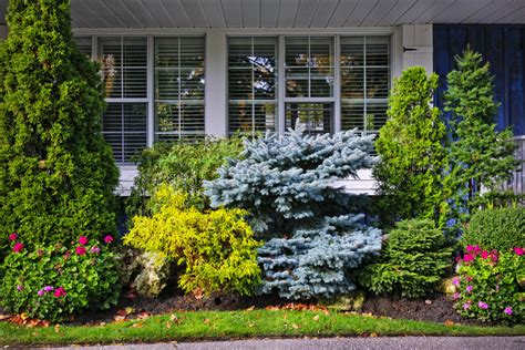 arborist landscaping trends to watch reliable tree
