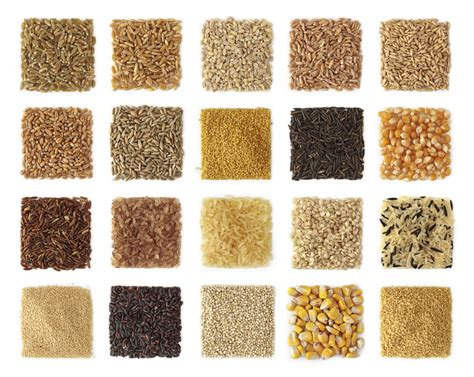 whole grains vs no grains barley vs wheat www pixshark images galleries with