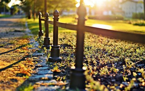 close  fence fencing grass green tree blur macro sun