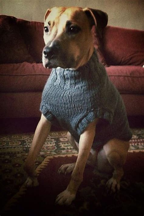 knitting pattern dog coat easy the ozzie large dog sweater pattern by jenna greer