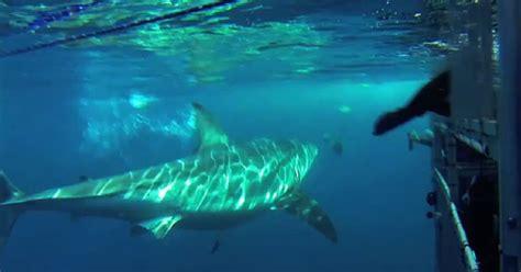 joyride shark attack south africa 2014 g1 foca escapa de tubar 227 o ao se proteger em gaiola de