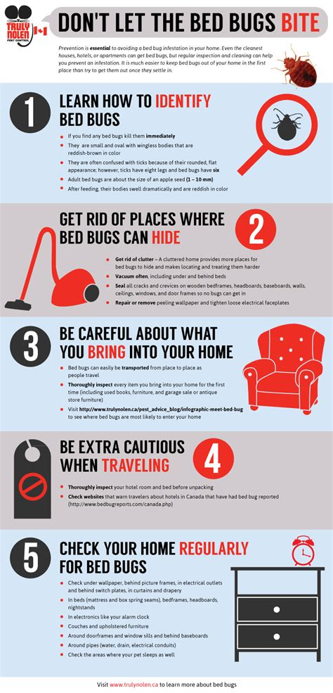 dont let the bed bugs bite infographic don t let the bed bugs bite truly nolen