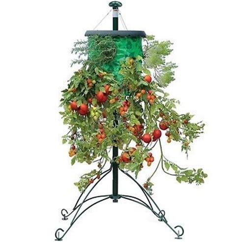 Topsy Turvy Planter Stand by How To Grow Strawberries In Hanging Pots Webnuggetz