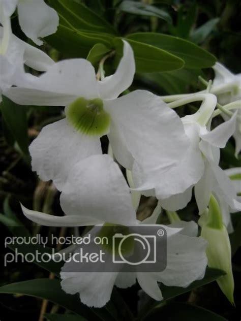 Möbel Radolfzell 2729 by Orchidando Forum Leggi Argomento Foto Orchidee