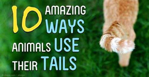 10 Amazing Uses of Animal Tails
