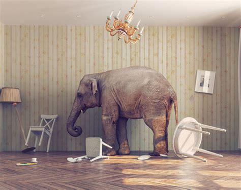 what does the elephant in the room how to use the elephant in the room to your advantage chartec
