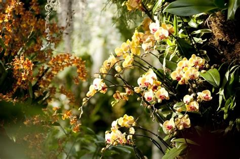 new york orchid show orchid show at ny botantical gardens amy hirschamy hirsch