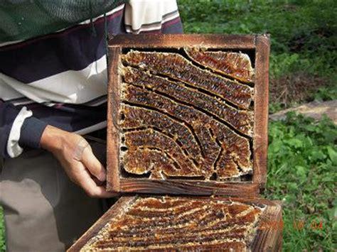 第一頁 上一頁 1 2 3 待ち箱の設置 茂木日本ミツバチの会