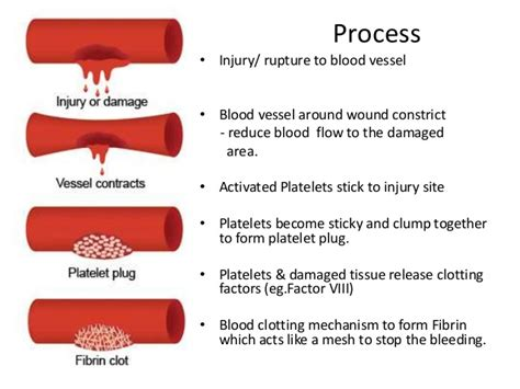 mechanism of blood clotting flowchart blood clotting