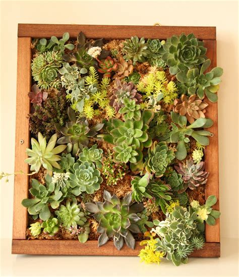succulent vertical garden succulent living wall with