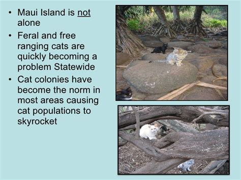 just another day on quot cat island quot feral free ranging cats on maui