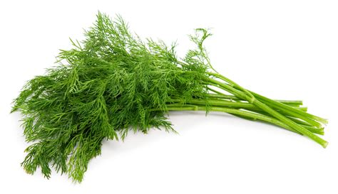 What Kind of Herb is Dill and How is it Used?