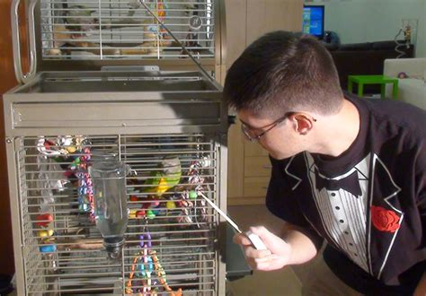 target cage how to parrot step by step taming guide