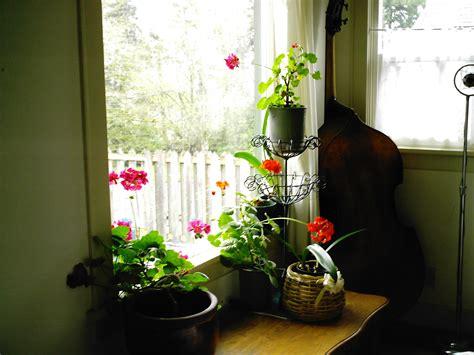indoor flowering plants indoor flowering plants minerva s garden blog