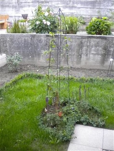 gartenideen für kleine gärten 3157 bepflanzung zaun idee
