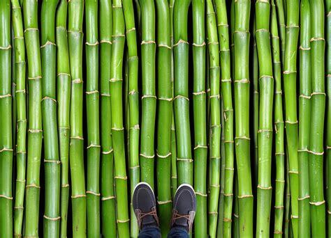 Bamboo   Atrafloor