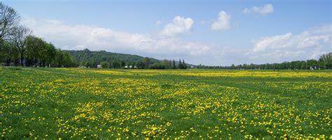 file krakow blonia meadow view to w krakow poland jpg wikipedia