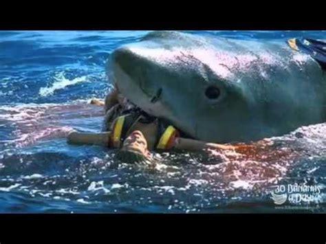 german backpacker shark attack caught on tape australia