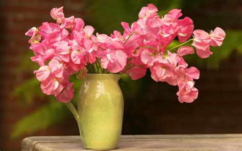 Fresh Flowers In Vase by Fresh Flowers In Vase Wallpaper 7368 1920 X 1200