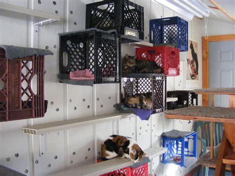 ideas for a cat tour the cat room purr fection feline rescue