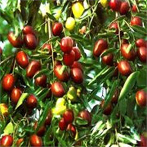 piante da frutto in vaso prezzi coltivazione piccoli frutti piante da frutto