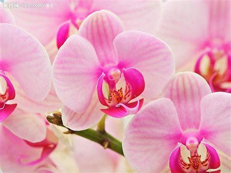 most beautiful flower bouquets hot girls wallpaper 蝴蝶兰设计图 花草 生物世界 设计图库 昵图网nipic com
