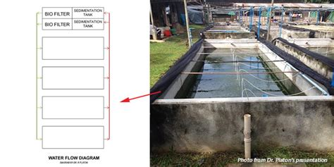 tilapia hatchery layout use of recirculation system for tilapia hatchery seafdec