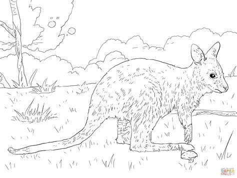 wallaby coloring page printable juvenile bennett s wallaby coloring page free printable