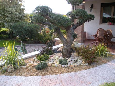 aiuole giardino immagini piante da terrazzo soleggiato hairstylegalleries