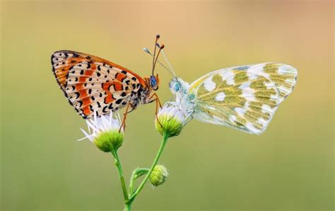 butterfly romance wallpapers
