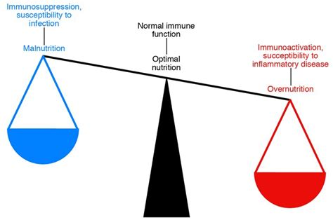innate immunity a question of balance jci inflammation stress and diabetes